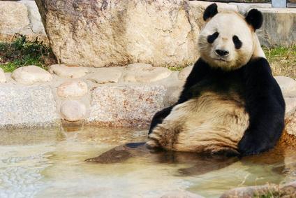 半身浴パンダ
