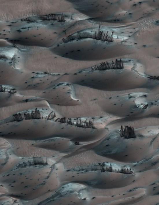 wpid-Mars-Trees-01.jpg
