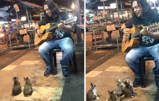 wpid-cats-and-street-performer.jpg