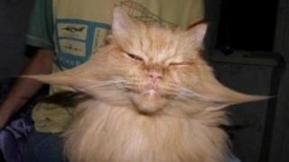 まったく癒されないネコたち<ブチャイク>画像50枚