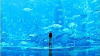 【画像】透明すぎる魚が発見される