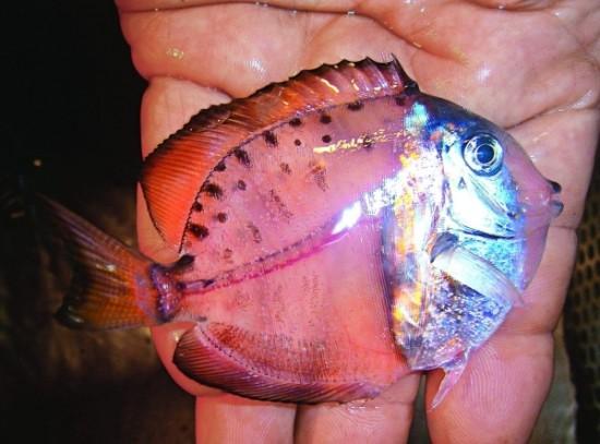 wpid-mysteryfish.jpeg