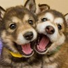 滑り台を楽しむ2匹の犬<動画>ウッキウキでワロタwwwww