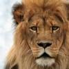 熊本地震「ライオン逃げた」嘘ツイートの佐藤一輝くん逮捕でご尊顔<2ch反応>バカッターは身を滅ぼす
