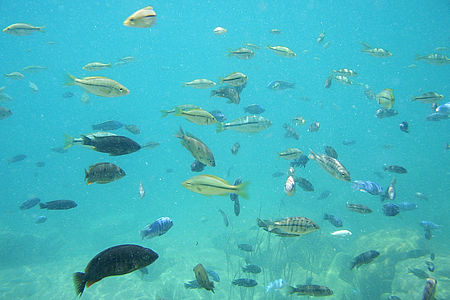 malawi_fish2