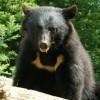 強そうな日本人ヤンキー vs 熊 ほかロシア人vs熊 野生のクマが人を襲う衝撃映像