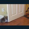 少しずつ仲良くなっていく先住猫と新入り猫(ΦωΦ)