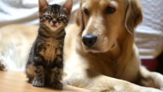 犬猫に噛まれて感染 怖すぎる「パスツレラ症」の体験談