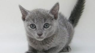死を悟ったネコの切ない行動 最後の日に撮影された1枚の写真に会心のツッコミ