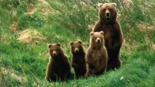 【動画・GIF】湖で遊んでたら熊が子連れで遊びに来たwwwwwwwwww
