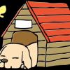 【画像】母ちゃんが凄い犬小屋つくったwwwwwww