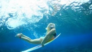 サーフィンしてたらマナティが挨拶にきたwwwwwww ※動画・GIF※
