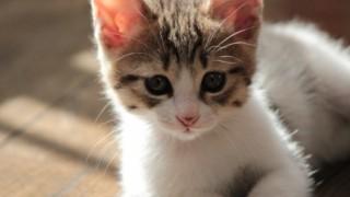 死んだ飼い猫がお盆に帰ってきた!Twitterで話題の小さな奇跡