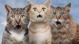 【炎上】事故死したネコの遺体で作られたハンドバッグ →「ハイハイ動物愛護ね、どんなんやろ」→ヒエ~ッ!