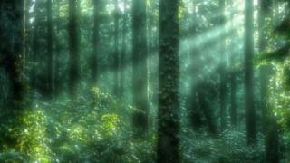 森で出会った少女…俺が小6の時に不思議な体験をした話