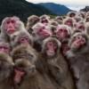 【悲報】沖縄に集まったサヨク活動家たちが猿そっくりだと話題に
