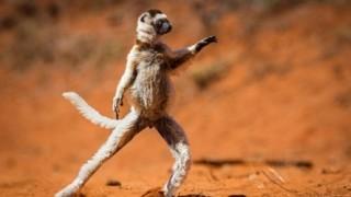 笑える野生動物の写真コンテスト作品 / コメディ・ワイルドライフ・アワード