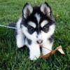 【悲報】一年間散歩させなかった犬の末路…ガイジーヌコレクション