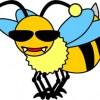 ハチに刺されたネコwwwwwwwwww