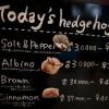 世界唯一ハリネズミと遊べるカフェ六本木「Hurry」がキャワワ萌え注意 →画像と動画