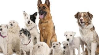 【大炎上】ペットの犬にタトゥー入れた結果 →ペット虐待画像