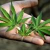そもそも「医療用大麻」ってなんなのか →厚労省の見解