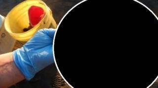 カナダで発見された奇妙なブヨブヨ謎生物に2ch特定班出動