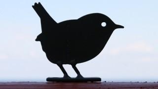 この鳥と素手で戦って倒せたら500万円って言われたらやる?
