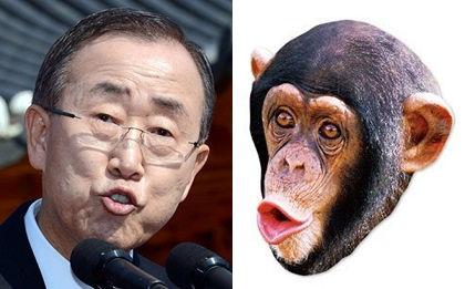 chimpan