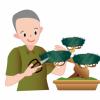 【画像】150万円以上する盆栽が凄すぎるwwwwwww