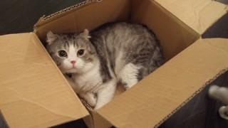 「飼いたい!」と大反響 拾われ待ちの猫カンナが話題 →画像