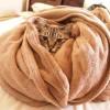 もうみんな知ってる新常識の正しい毛布の使い方