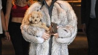 フランス娘たちがパンティ一枚で毛皮売買に抗議 → 画像
