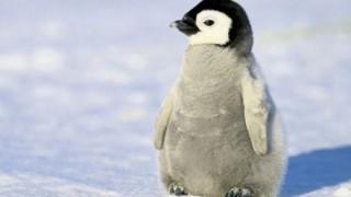 ペンギン「なんかあっちで撮影してるンゴwwwwww」