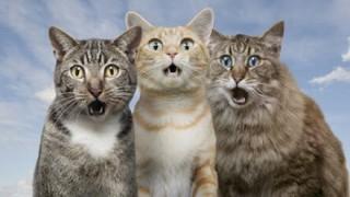 【残虐】猫を虐待する韓国人に懸賞金 ※動画アリ※