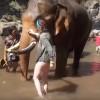 ゾウの鼻を撫でてた女性が吹っ飛ばされる衝撃映像 ※GIFと動画※