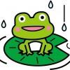 【画像】小さいカエルって可愛いよね?