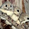 日本にもスゴイ生物がたくさんいるって事を紹介するスレ