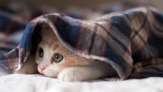 【画像】寒がりな仔ネコちゃんwwwwww