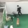 【衝撃虐待】韓国ペットホテル職員が犬を暴行する映像に怒り