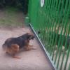 「ネットにもこういう人いる」威勢のいい犬同士の喧嘩 ⇒ いざゲートが開くと・・※動画とGIF※