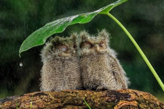 wpid-PAY-Owls.jpg