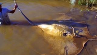 淡水や河口に潜む人も殺せる世界の魚たち
