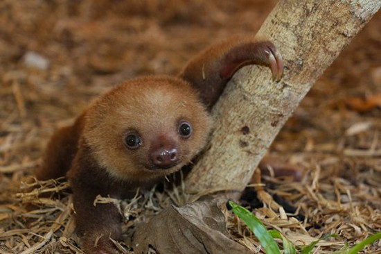 wpid-sloth05.jpg