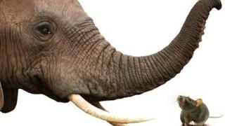 ゾウの『鼻パンチ』の威力がヤバいwwwwwwwww