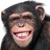猿に育てられた8歳女児の動画と画像