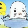 【可愛い】ゴマフアザラシの赤ちゃん2頭誕生<画像>静岡あわしまマリンパーク
