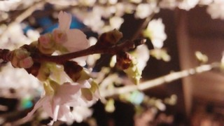 【画像】AV女優さん大集合のお花見が楽しそう