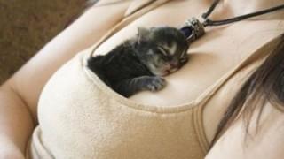 猫の里親になるためのハードル わろたwwwww