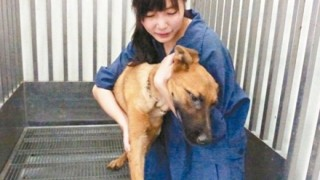 【悲しすぎる世界】700匹の犬を処分 動物を愛した保護施設女性職員の末路